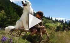 Bande-annonce du film Belle et Sébastien, l'aventure continue