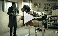 Bande-annonce du film Dogman