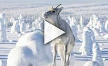 Bande-annonce du film Aïlo: une odyssée en Laponie