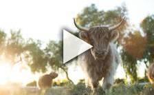 Bande-annonce du film The Biggest Little Farm