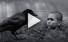 Bande-annonce du film The Painted Bird